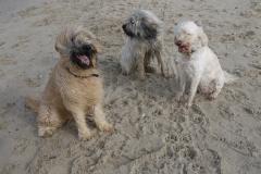Alle drei am Strand